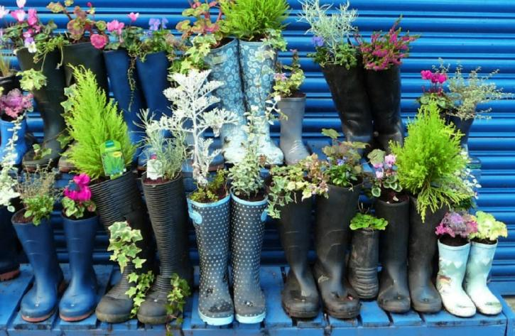 A picture of plants growing in shoes