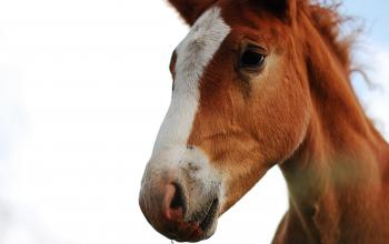 A lovely horse